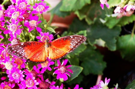 11596748 - the butterfly on the flowers1