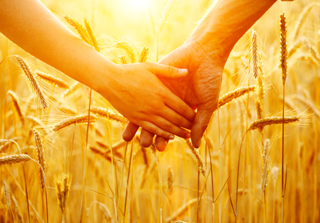 64664970 - couple holding hands and walking on golden wheat field over sunset